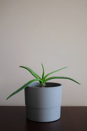 Modern clean style interior with aloe home plant. Empty place your text 写真素材