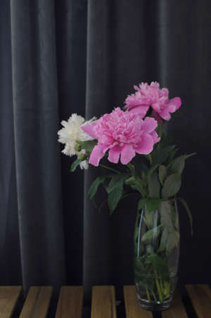Blooming flower in vase. Fluffy peonies bouquet on dark grey background.
