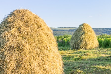 Pile of hay on field. Countryside landscape with haycock in summer. Straw bales in field and blue mountains on background