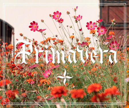 Primavera hand lettering with flowers garden on background. Parallel pen calligraphy