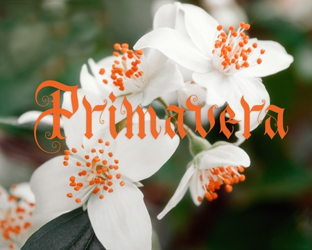 Primavera hand lettering with flowers on background. Parallel pen calligraphy