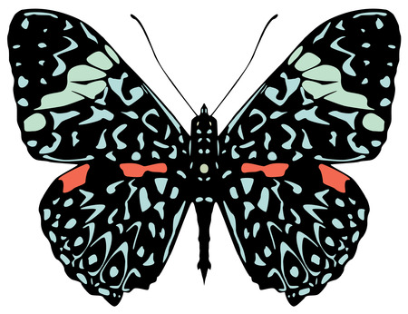 starry night: Starry Night butterfly