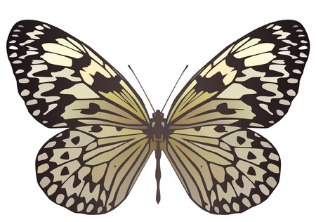 Paper Kite butterfly Illustration