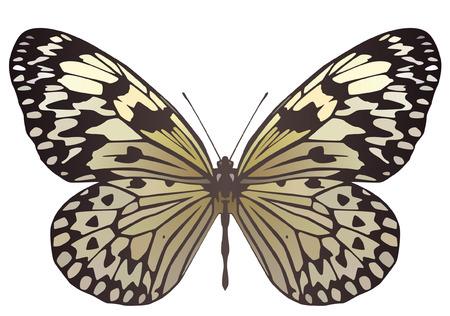 Paper Kite butterfly Illustration