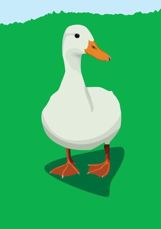 White duck Stock Vector - 4746934