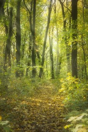 Lovely gentle, autumn