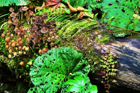 underbrush: Mushrooms and plants on the groundcover in the wood