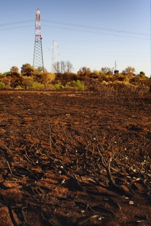 powerline: Land burned after a fire close to a powerline
