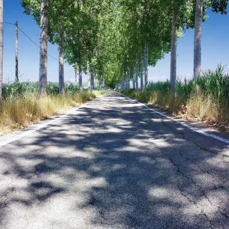 Straight country road between two rows of trees in lower Friuli, Italy photo
