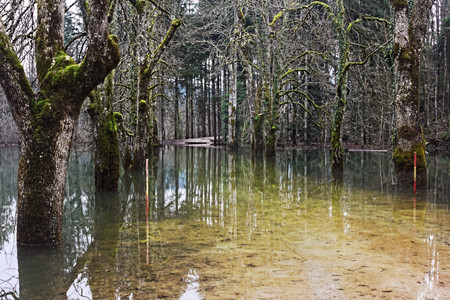 submerge: Trees and road submerged by water during the flood of the Rakec creek, Slovenia, November 2014 Stock Photo