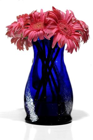 pink gerberas in blue water-glass isolated on white photo