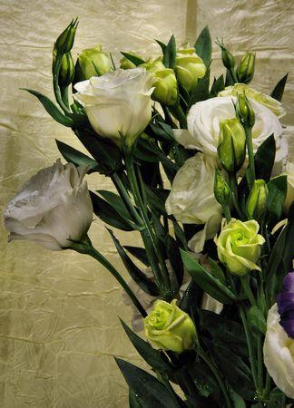beuquef o whitef lisianthus photo