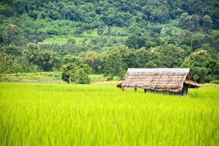 Green rice fields and mountains in Northern Highlands of Thailand South East Asia photo
