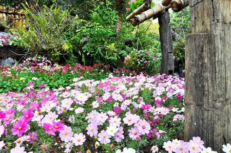 azaleas: Pretty manicured flower garden