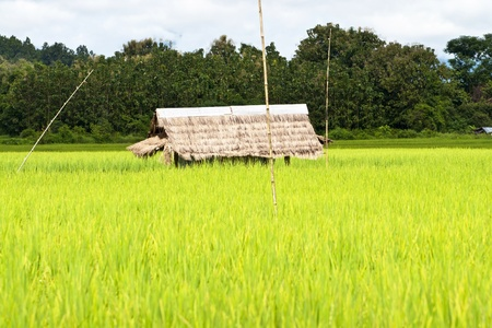 Green rice fields in Northern Highlands of Thailand South East Asia photo