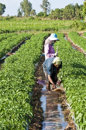 man and women working in the park of green peppers