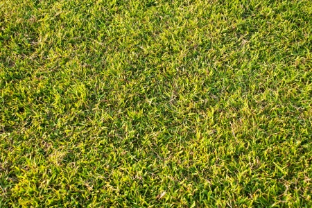 soccer field green grass photo