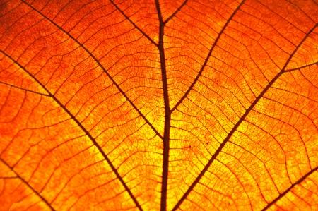 dode bladeren: droge blad op geweven document Stockfoto