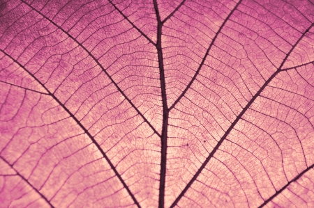 dry leaf on textured paper color red