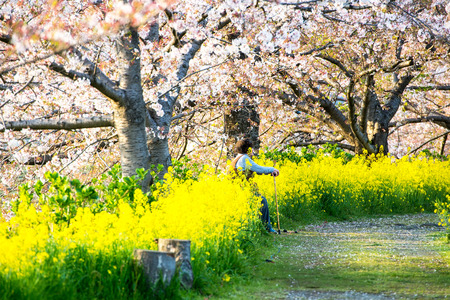 odawara: Cherry blossom and a old woman on the bench in a garden, Odawara, Japan, April 8, 2014 Editorial