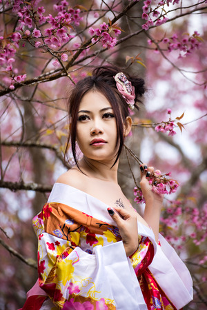 Asian sexy woman wearing traditional Japanese kimono and Wild Himalayan Cherry Or Cherry blossom photo