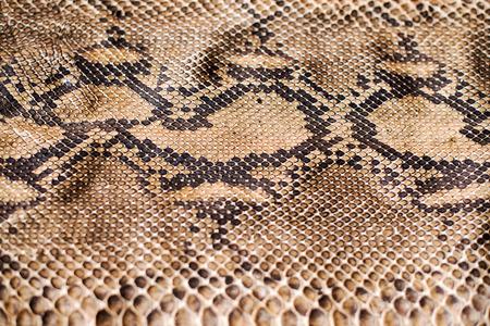 serpentes: Python snake skin pattern Stock Photo