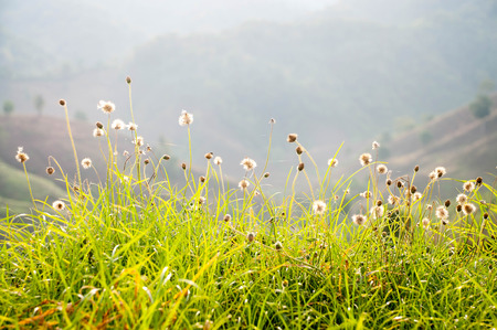 natual: mountains meadow and flower spring season in floral natual
