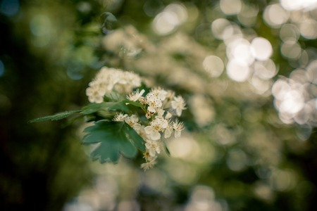 shimmering: background shimmering defocused soft bokeh Stock Photo