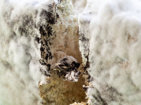 Macro mold and bacterial colonies growing on bread surface and inside bread