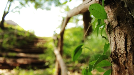 Leaves of a small branch over a fence and ladders made of branches of trees Stock Photo