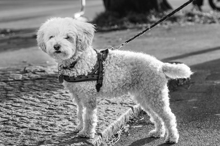 Dog in Harness
