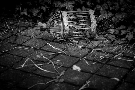 Old Weathered Rusted Blue Bird Cage In Overgrown Environment And Stone Floor In Dramatic Black and White With Heavy Vignett