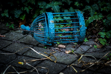Old Blue Bird Cage Imagens