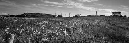 Meadow with wild flowers black and white Reklamní fotografie