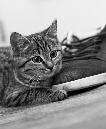 Cute Baby Cat