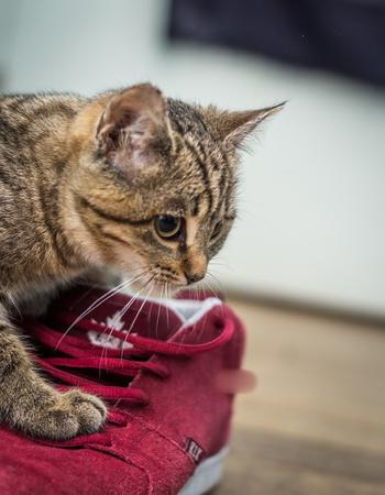 Cute Cat And Shoe