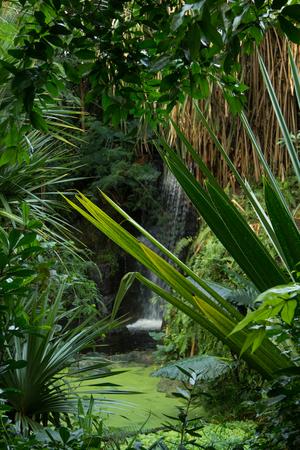 Jungle Waterfall and Vegetation
