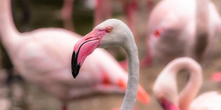 Flamingo Head Close Up