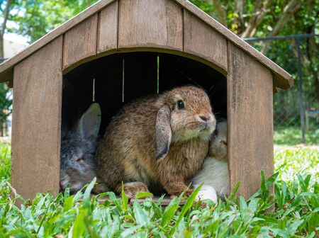 Cute little rabbits sitting in wooden hutch in the garden. Easter day concept idea.