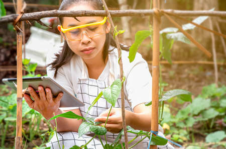 Young female farmer sittining in green long beans farm with tablet in her hands and examining crop.