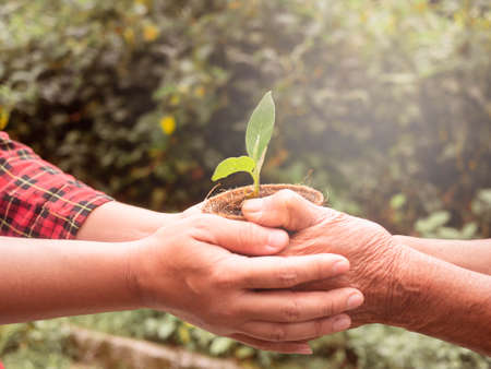 Senior and Adult are holding young plant on blur nature  with sunlight. Zdjęcie Seryjne