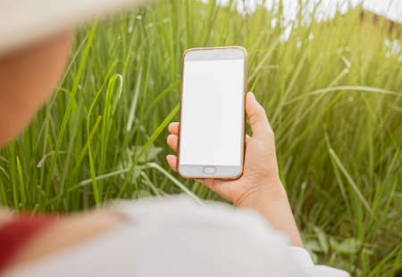 Close up of Young female farmer examining vetiver grass blade beside cornfield with smartphone in her hands.