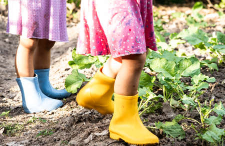 Happy two child in yellow and blue boots are watering the vegetables grown in the backyard. Close-up of legs