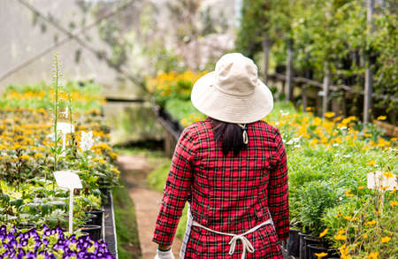 Rear of a happy female farmers with a tablet in her hand working in the greenhouse. Modern technology for farmers and floriculture.
