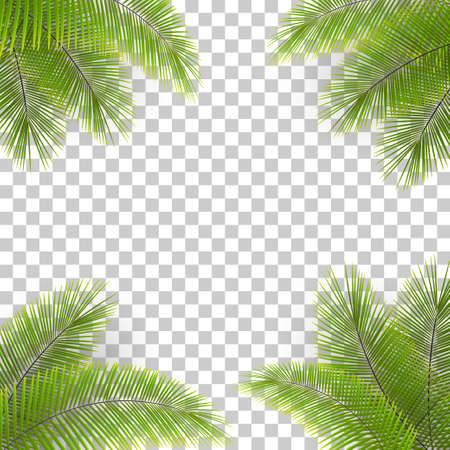 Vector palm tree leaves in the corners on transparent backfround. Tropical background. Coconut leaves frame. Illustration