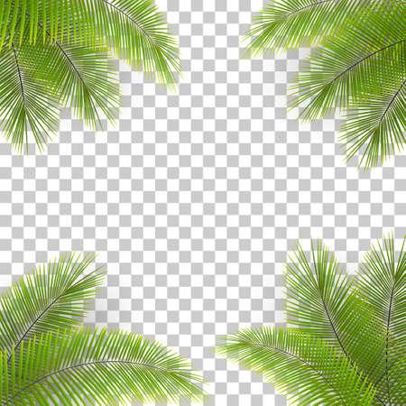 Vector palm tree leaves in the corners on transparent backfround. Tropical background. Coconut leaves frame. Ilustração