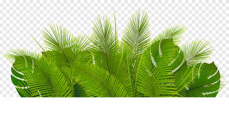 Tropical vegetation. Green leaf pile isolated on transparent background.