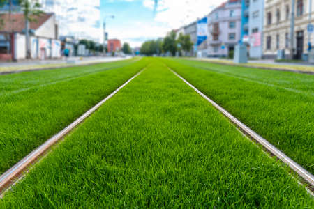 Green track. Grass covered tramway track. Greenery in the city. Habitable zone reduce urban heat. Island effect.