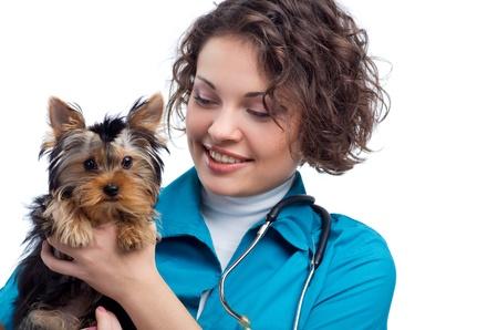 veterinario: mujer veterinario que posea un cachorro - Yorkshire Terrier Foto de archivo