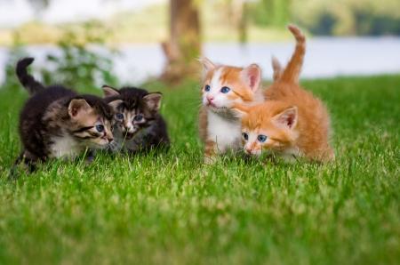 4 一緒に庭で遊ぶ子猫 写真素材